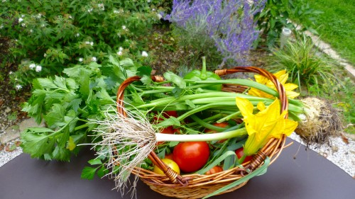 Cueillette de légumes Chambre d'hotes de charme à Beaune